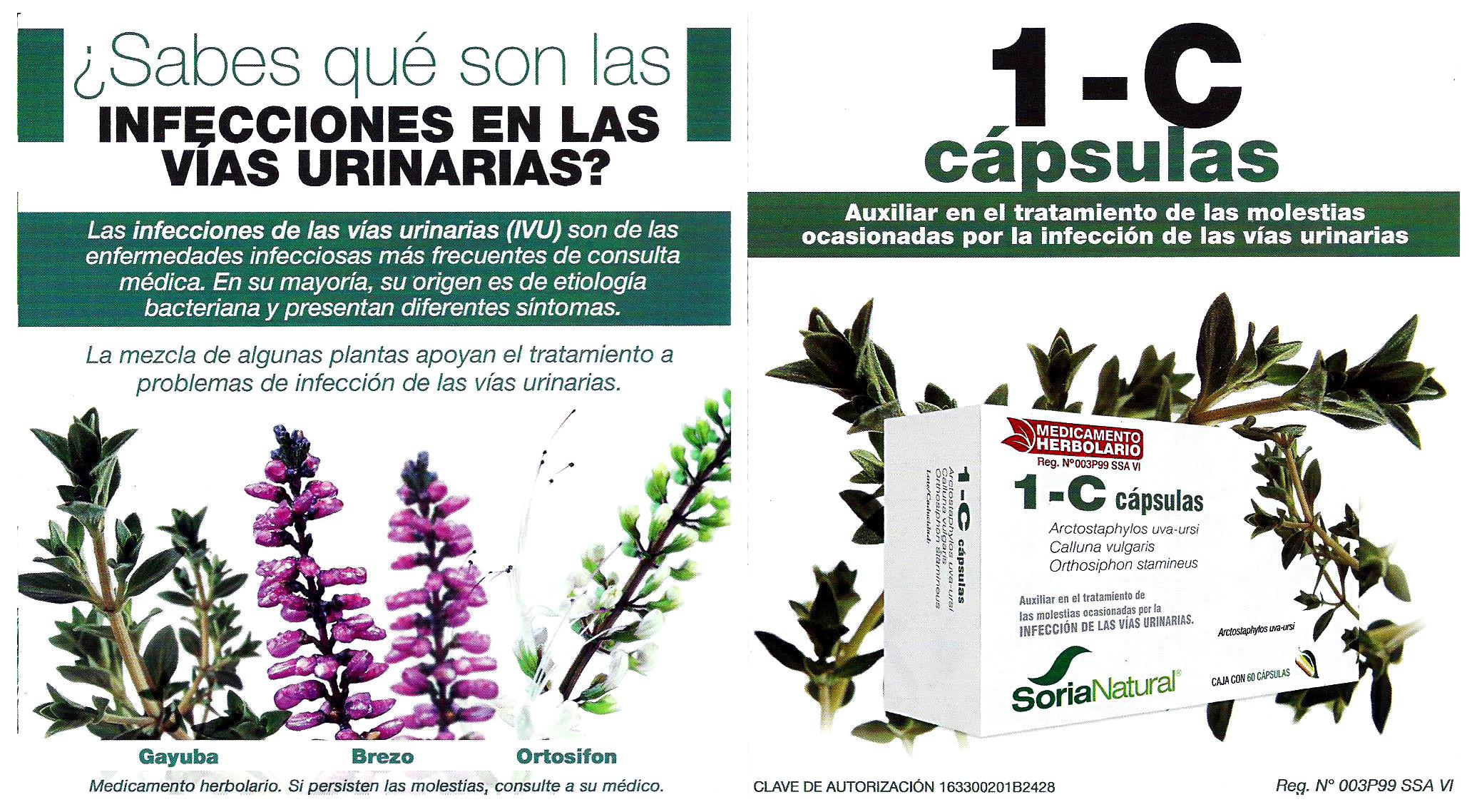 flyers-impresos-guadalupana-1-dic-160005y6
